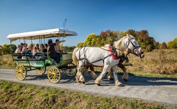 horse-drawn-carriages-vendee-stephane-grossin
