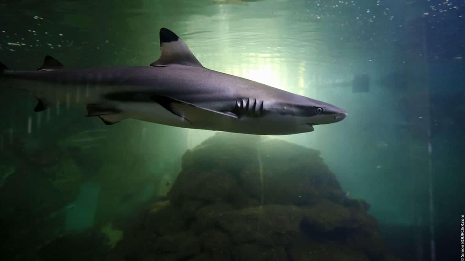 sightseeing-vendee-aquarium-SimonBOURCIER