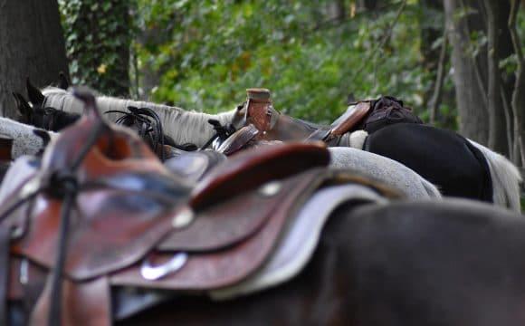 equestrian-centres-pays-de-saint-jean-de-monts-vendee