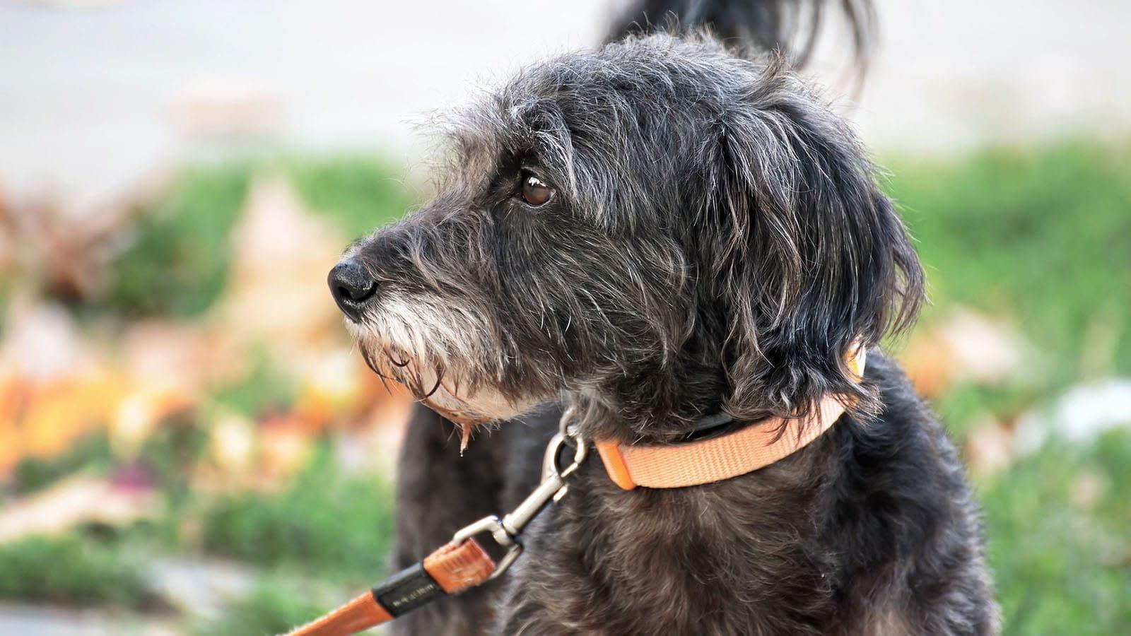 holidays-dog-pet-friendly